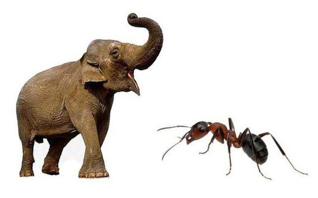 Kiến và voi